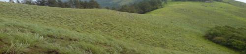 Gopher Gale Plains