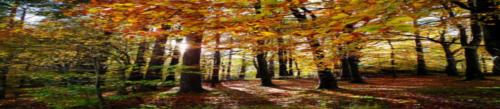 Au Fait Woods