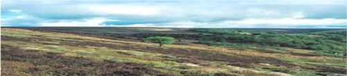 Trodden Moorland