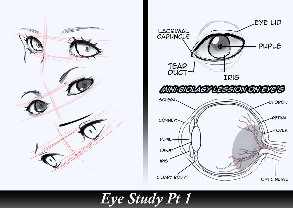 eyes study reference by rozuburakku on deviantart