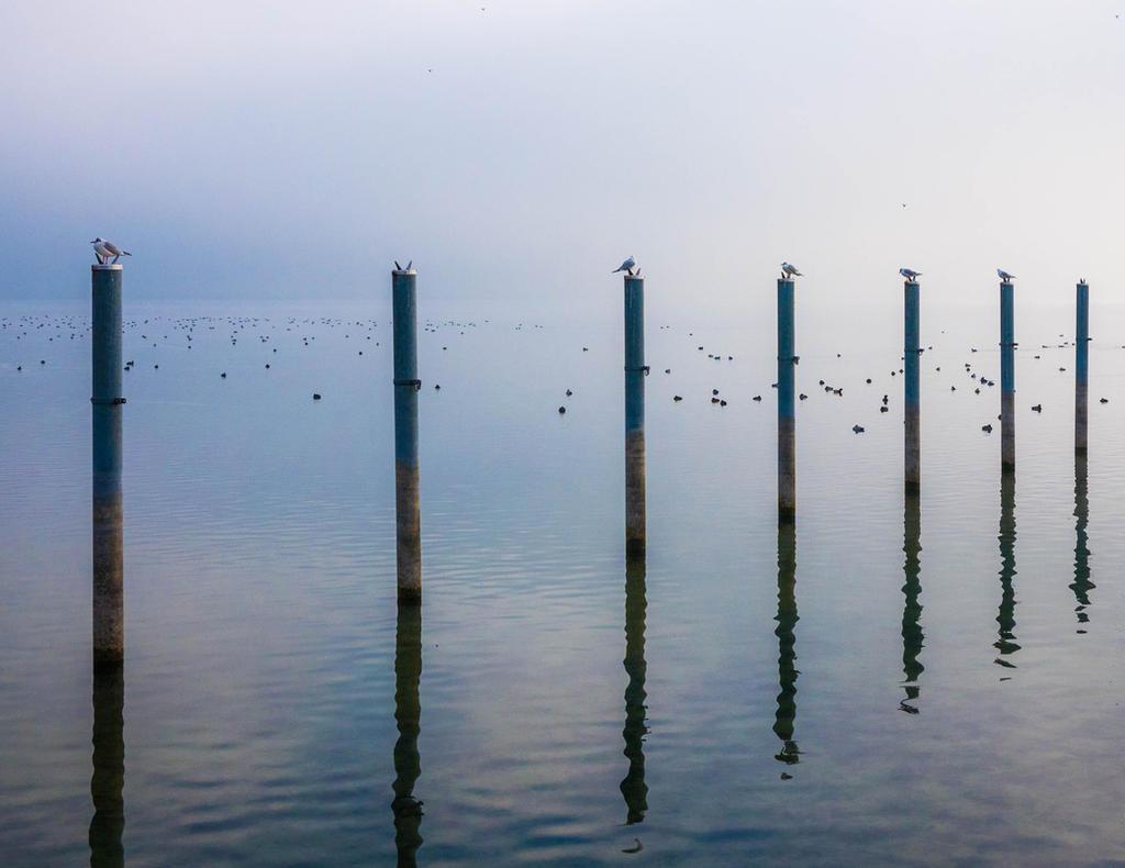 Birds on sticks by afoxen