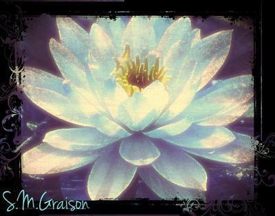 Luminous Lotus by StormeChaser