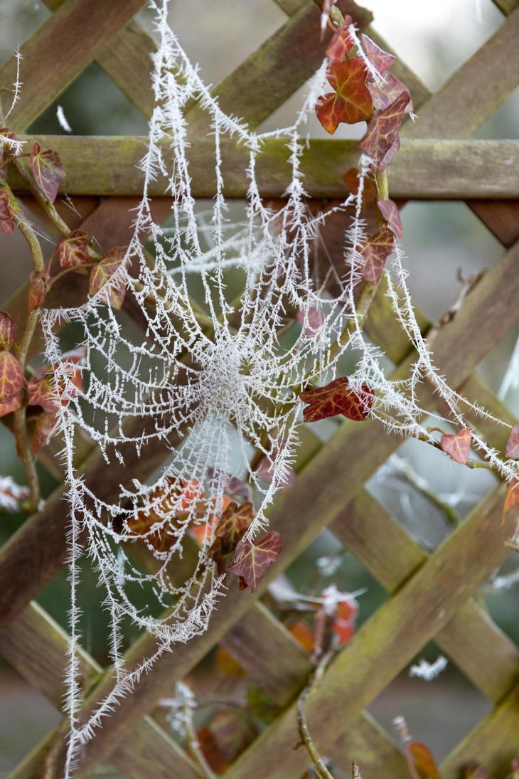 spiderwebs during winter by oxygen