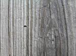 Wood - Stock 1