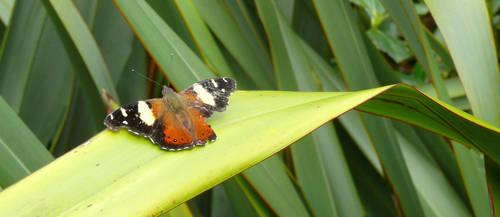 Moth on Flax
