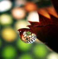 eye of the droplet by sinanTR