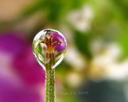 lamp of my garden by sinanTR