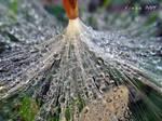 flushing drops