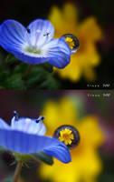 flower raising time by sinanTR