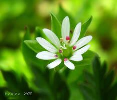 Tiny Miny by sinanTR