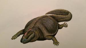 placodus