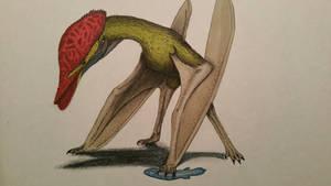 Corythodactylus mergus