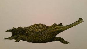 Gavialis pachyrhynchus