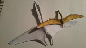 pterosaur comparison 2
