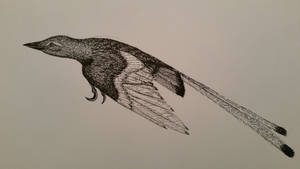 confuciusornis by spinosaurus1