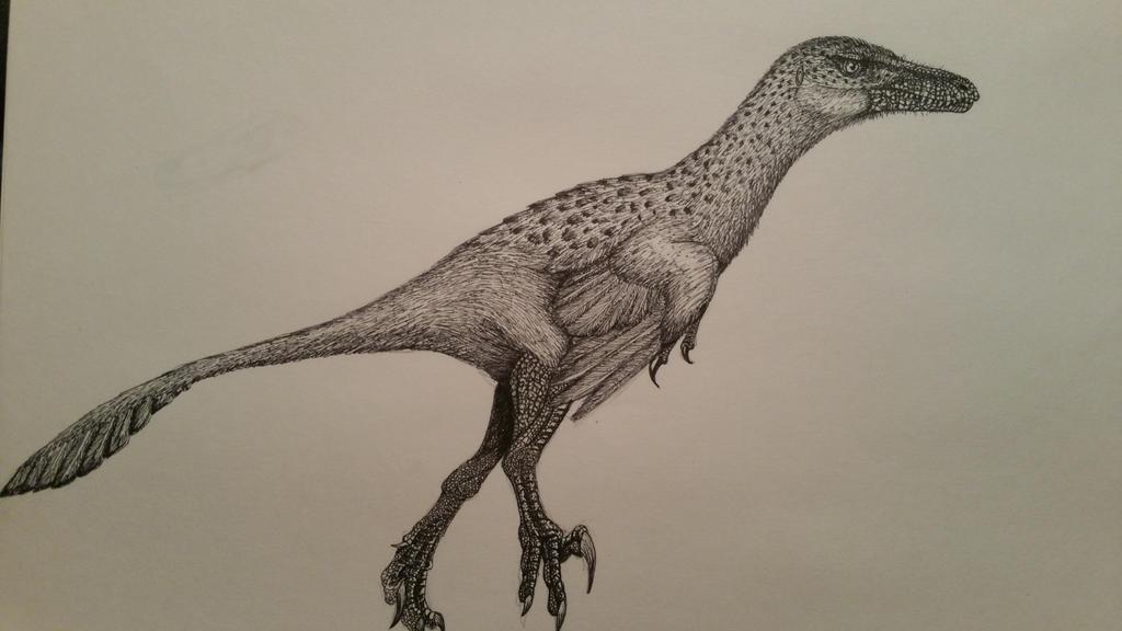 Saurornitholestes sullivani