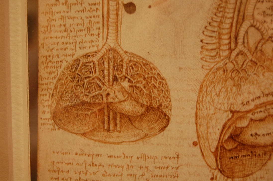 Da Vinci\'s Anatomical Drawings by roony-of-the-wood on DeviantArt