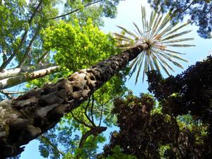 Dinosour Palm