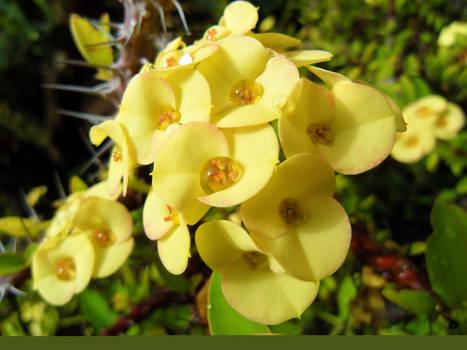 Yellow Dessert Flower