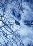 bird in winter II by LemuriaFalls
