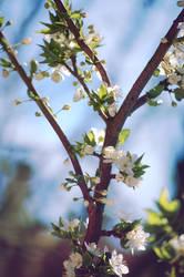 Flowers S P R I N G