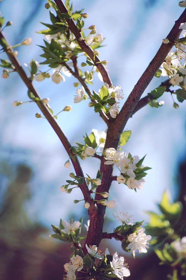 Flowers S P R I N G by LemuriaFalls