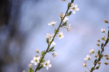 Flowers S P R I N G 2