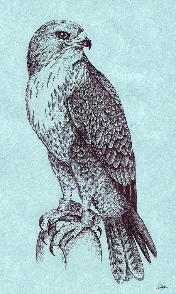 Peregrine Falcon By Grwobert On DeviantArt