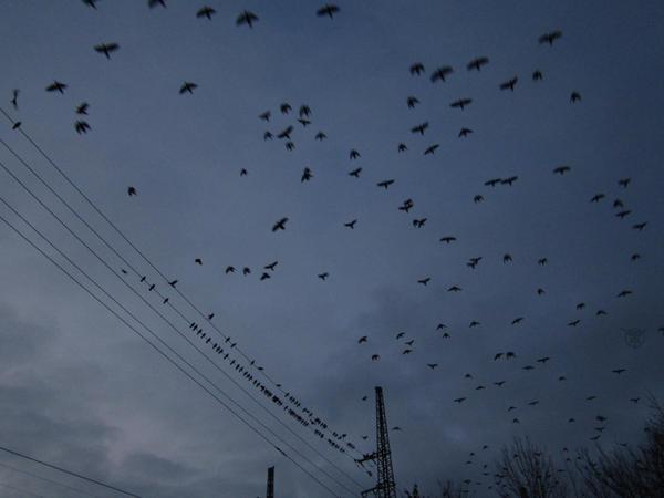 Birdies by UrsusVanDraco