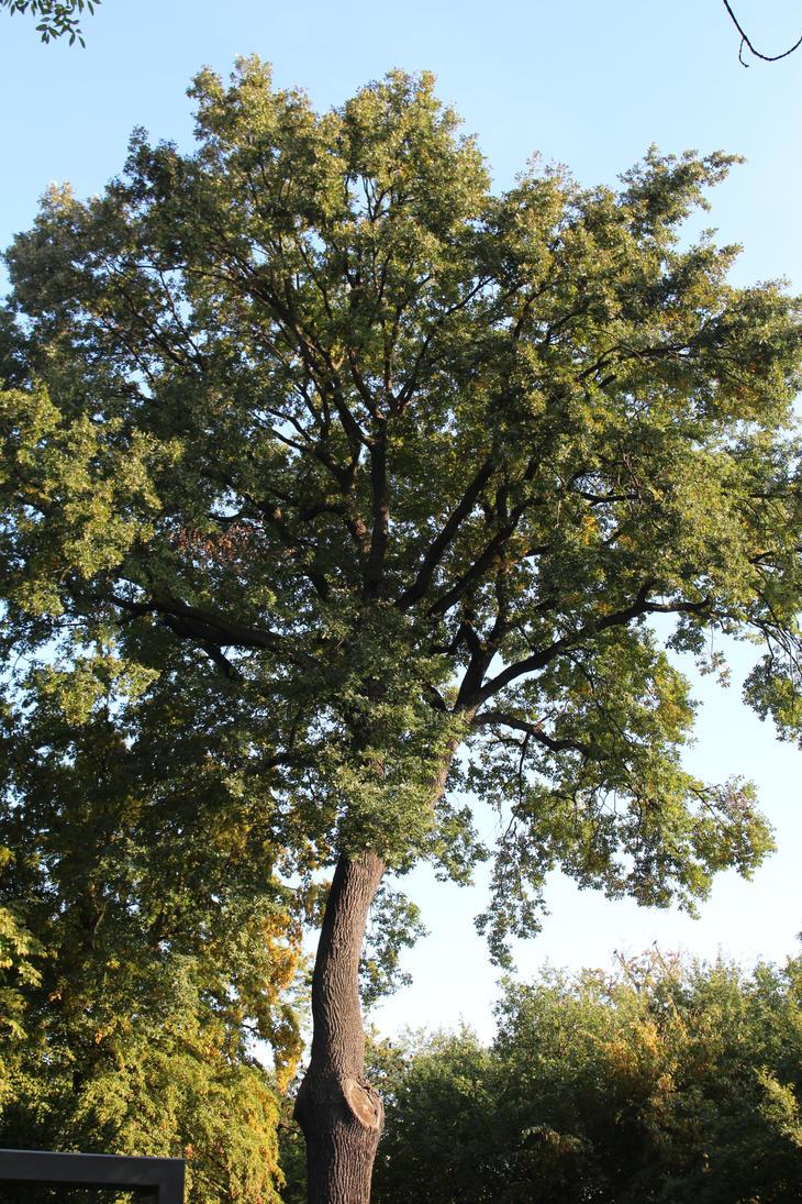 Treecrown by UrsusVanDraco