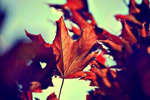 Autumn by Bzzu