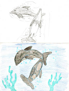 Chilean dolphin (sketches)