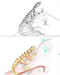Lizard of the Atacama trees (sketches)
