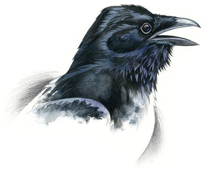 Raven by RobertMancini