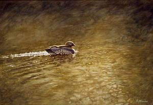 Golden Glow-Australian Wood Duck