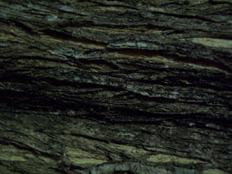 STOCK - Wood Texture 009 by Chaotic-Oasis-Stock
