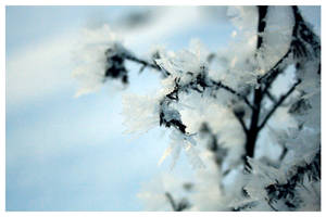 winterflower by Meriiit