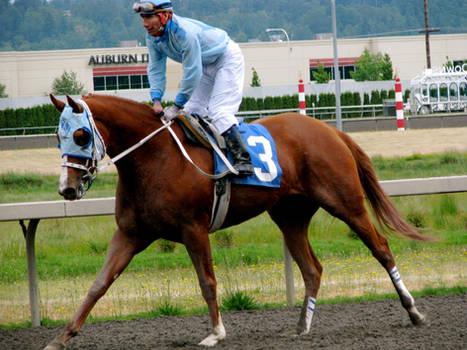 Stock - Racehorse 5
