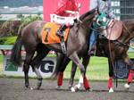 Stock - Racehorse 8