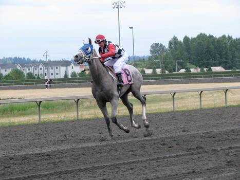 Stock - Racehorse 9