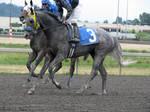 Stock - Racehorse 15