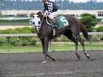 Stock - Racehorse 17