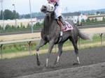 Stock - Racehorse 19