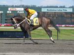 Stock - Racehorse 27