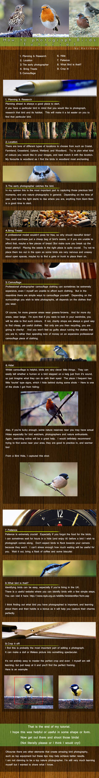 How to  Photograph Birds Tut.