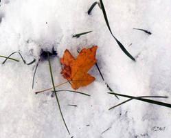 Golden leaf on the snow by nadineleon