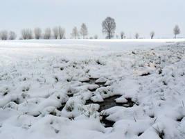 Snow by nadineleon