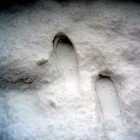 Footprints in the snow by nadineleon