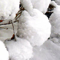 Snowballs by nadineleon
