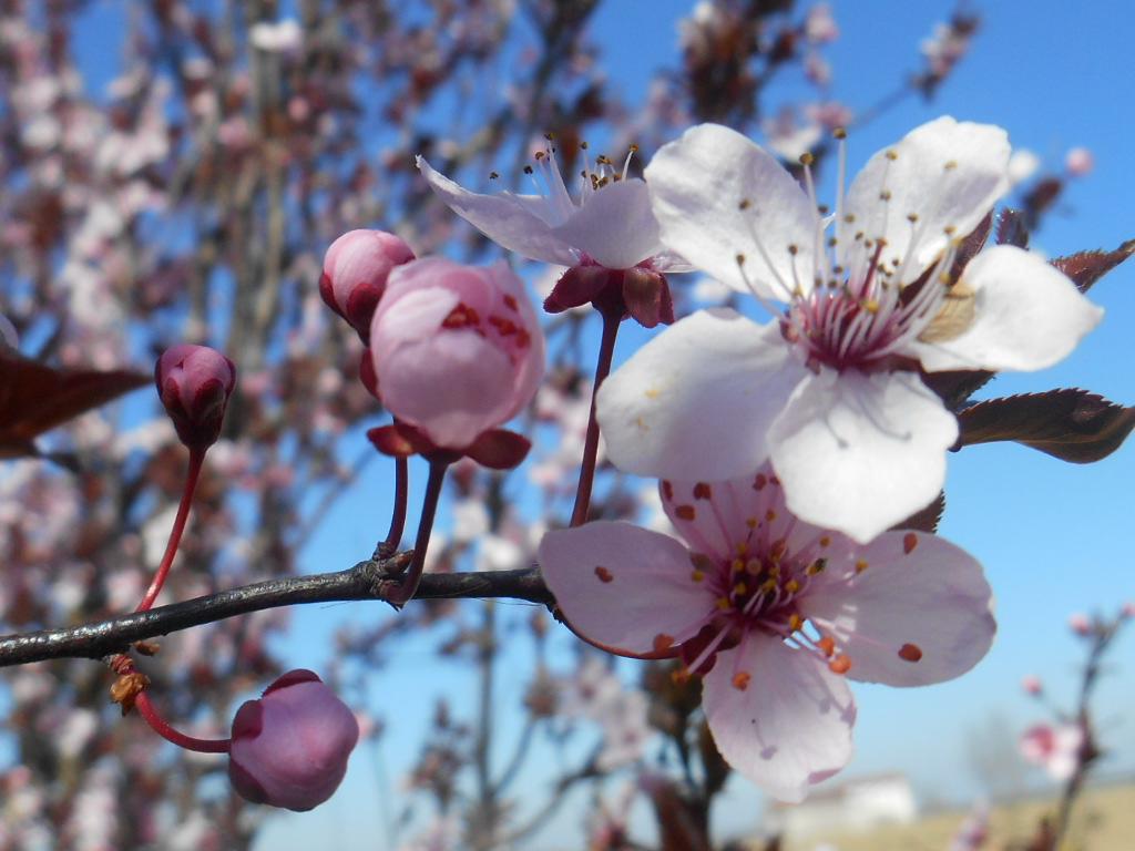 Spring by nadineleon